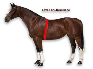 obvod hrudníku koně